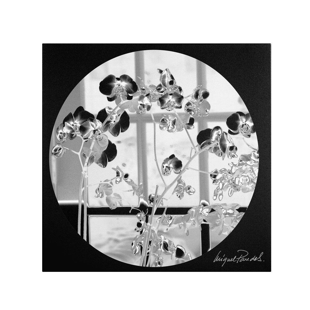 14 in. x 14 in. Black Orchids Canvas Art