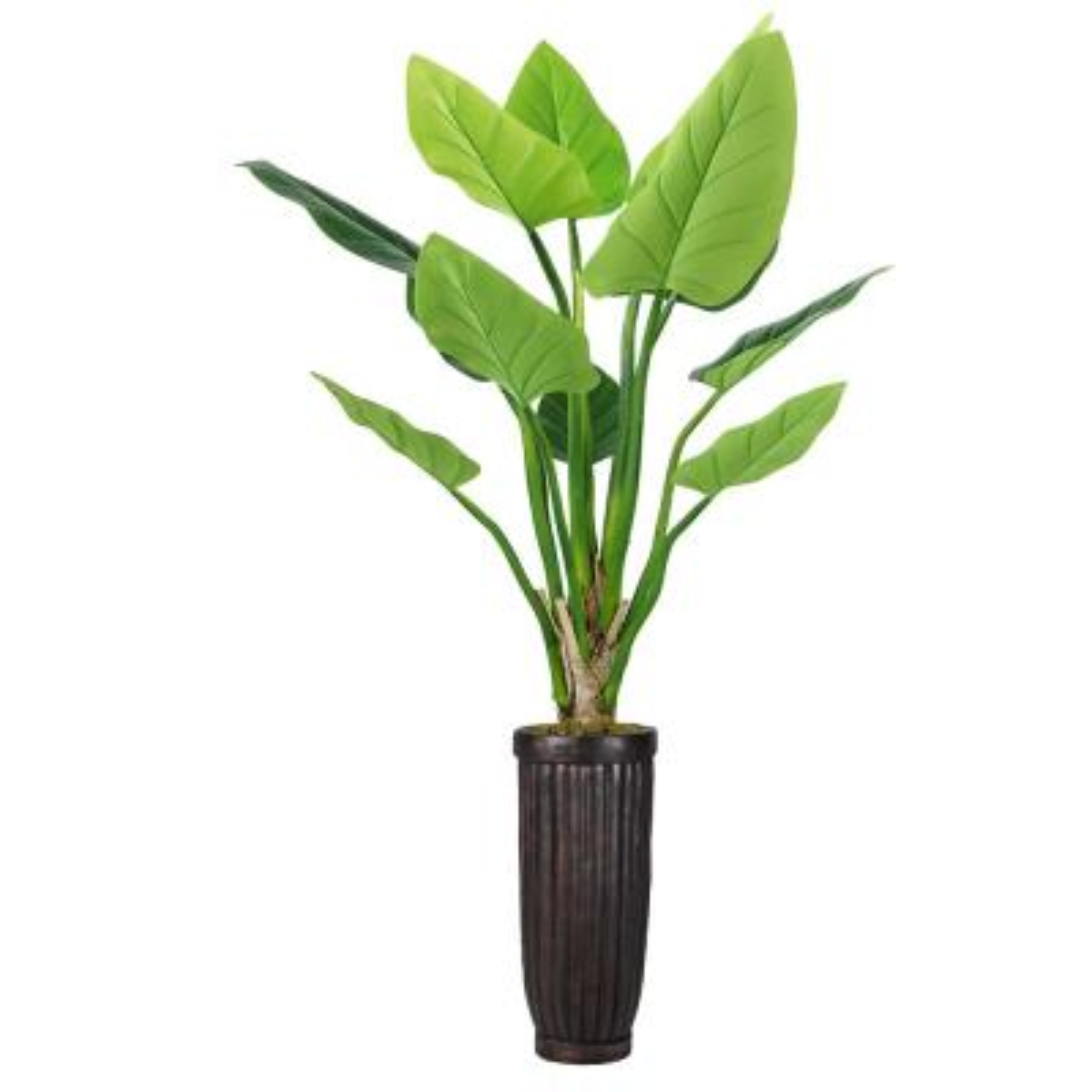 69 in. Philodendron Erubescens Green Emerald in Fiberstone Planter