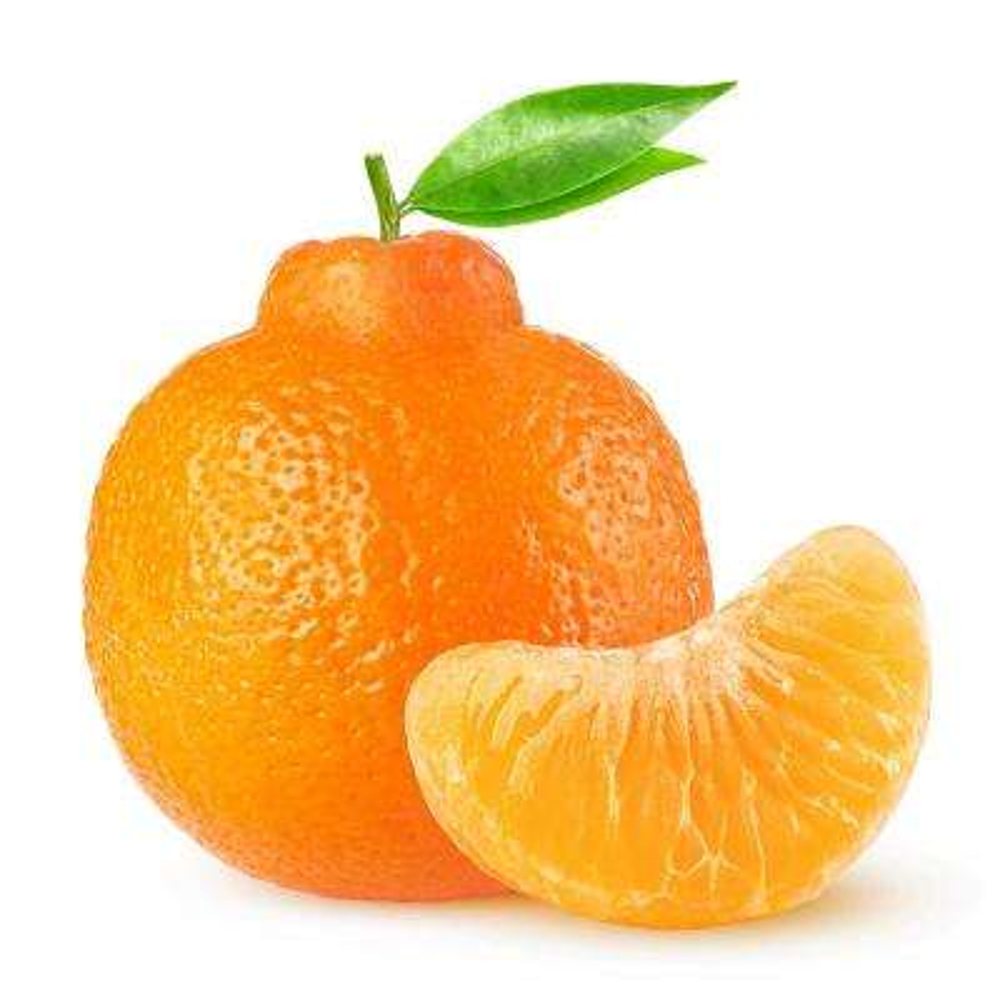 Tangelo Citrus Tree -  Minneola - 1 Plant