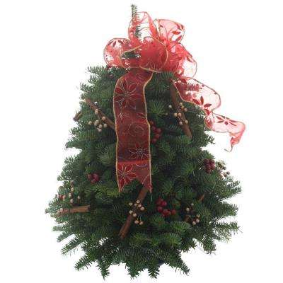 18 in. Balsam Fir Cinnamon Stick Fresh Tabletop Tree Arrangement : Multiple Ship Weeks Available