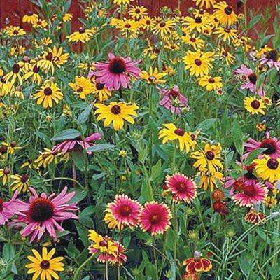 Perennial Native Wildflower Mix, Multipler Varieties with Many Colors (300 Seed Packet)