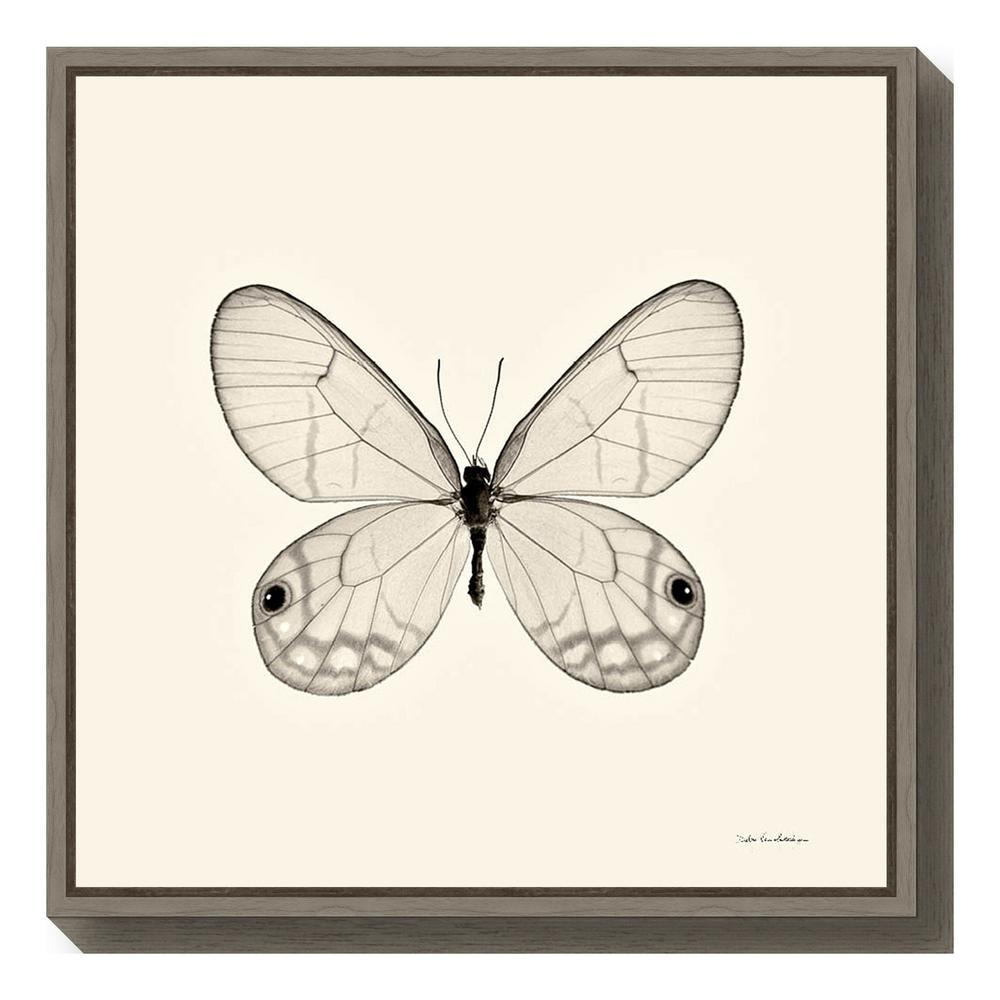 """""""Butterfly I BW Crop"""" by Debra Van Swearingen Framed Canvas Wall Art"""