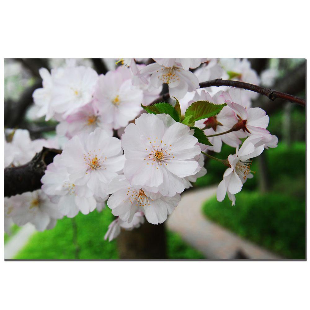 Trademark Fine Art 24 in. x 16 in. Cherry Blossom Canvas Art