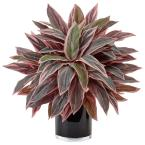 Nearly Natural Indoor Caladium Artificial Plant in Black Glossy Planter