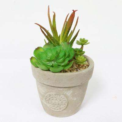 5 in. Indoor Artificial Succulents in Pot
