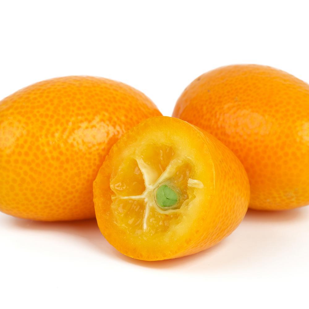 Kumquat Citrus Tree - Nagami Kumquat  - 1 Plant