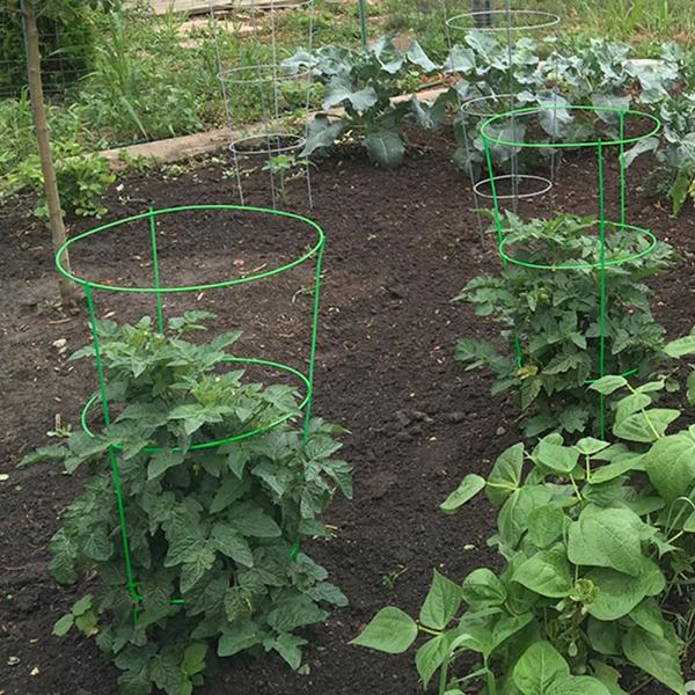 Gardener S Blue Ribbon 42 In Heavy Duty Green Tomato Cage 901594gr The Home Depot