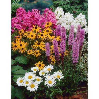 Great Sun Garden Perennial Collection Bulbs (4-Pack)