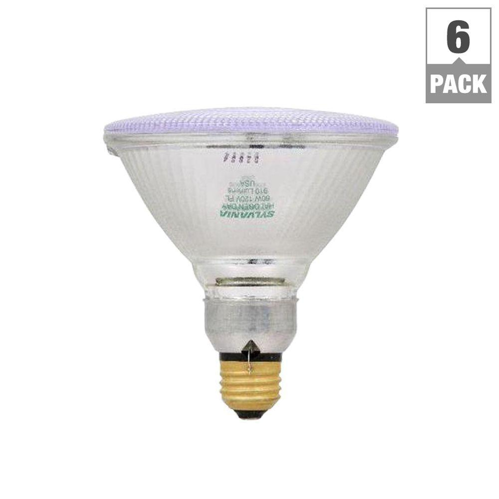 60-Watt Halogen PAR38 Flood Light Bulb (6-Pack)