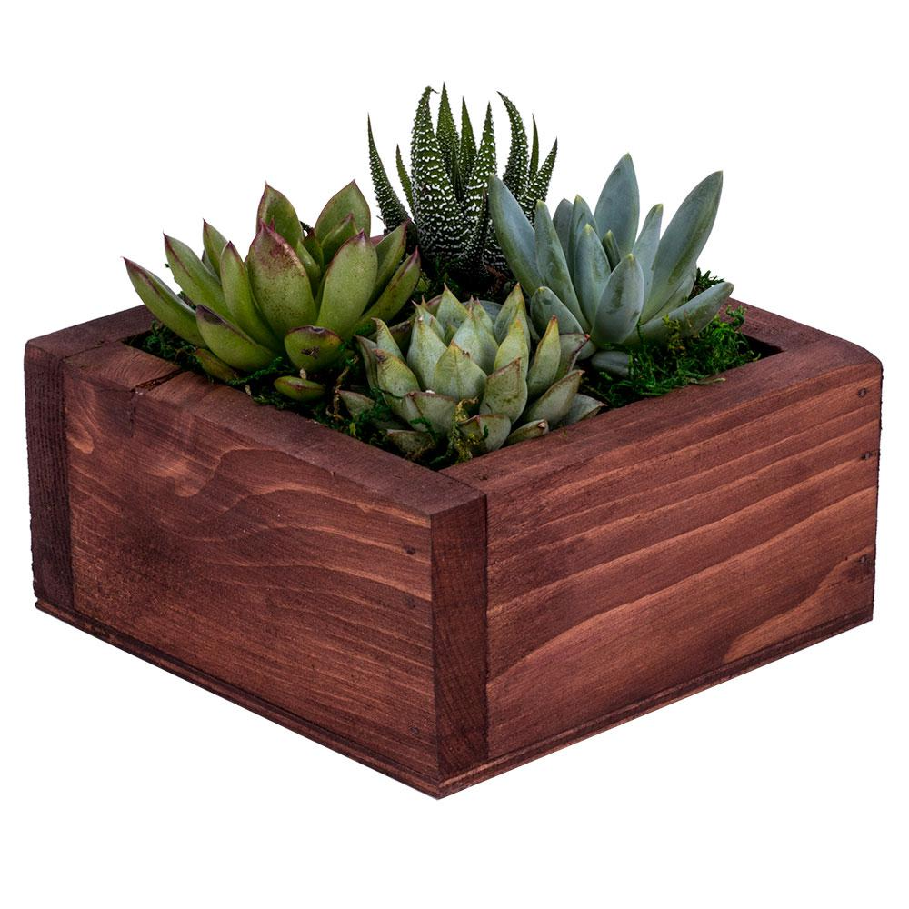 Decoblooms Living Wall Succulent Garden Db6812 The Home Depot