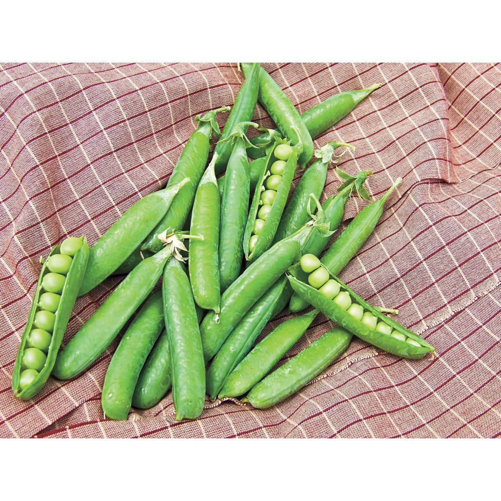Pea Northfield (225 Seed Packet)