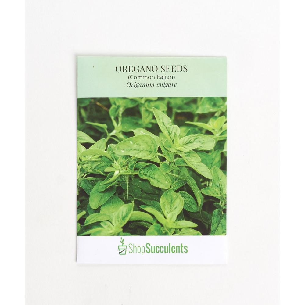Oregano Seeds