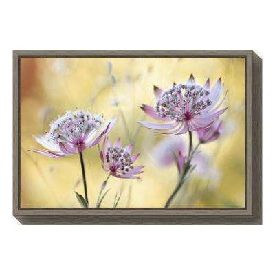 """Astrantia Major"" by Mandy Disher Framed Canvas Wall Art"