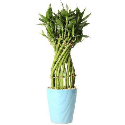 Medium Lucky Bamboo Flower Braid in 4.5 in. Samba Horizontal Turquoise Ceramic