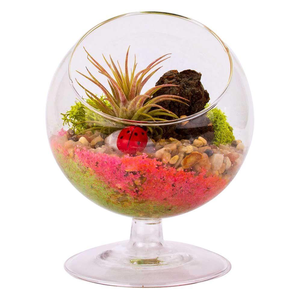 null 4 in. Glass Globe Pedestal Terrarium