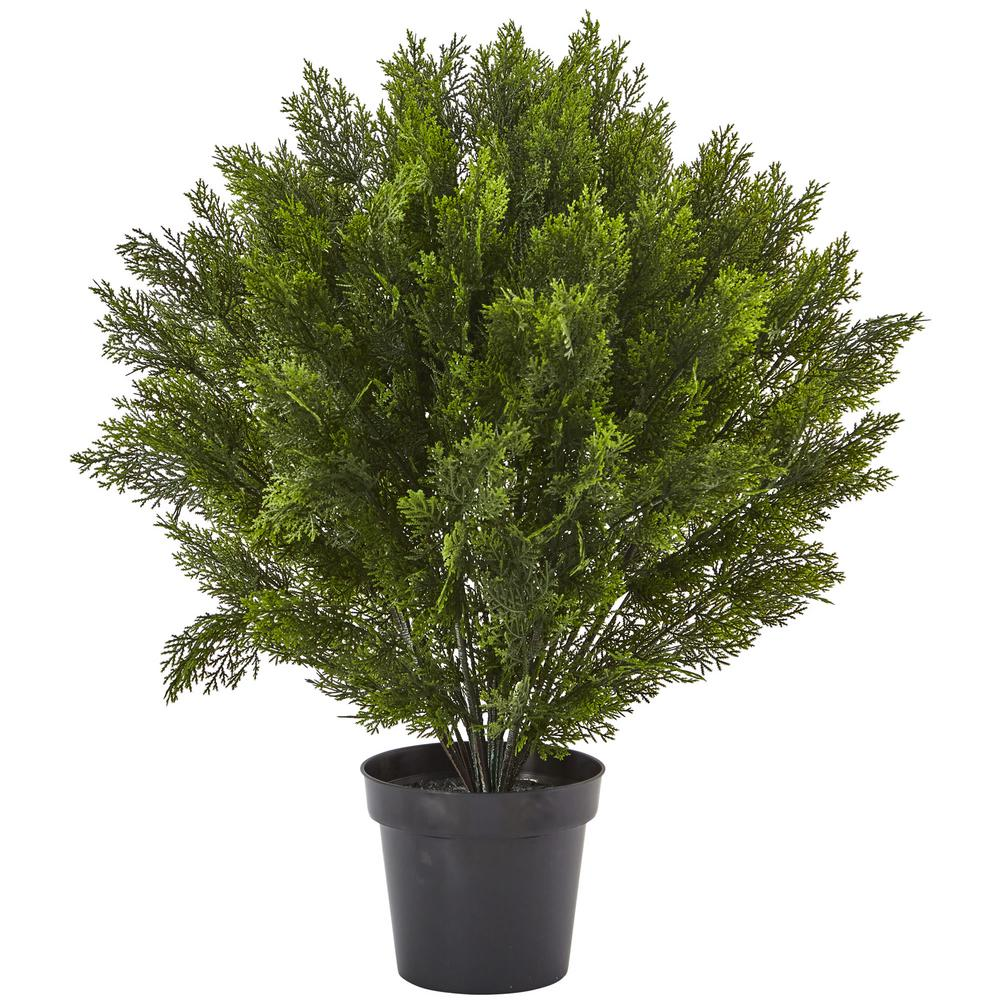 3 ft. Cedar Bush (Indoor/Outdoor)