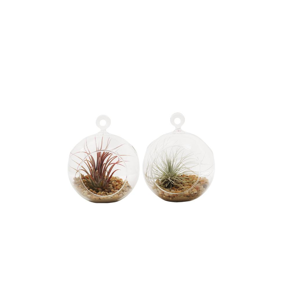 Shop Succulents Mini Terrarium Duo With Air Plants 2 Ter Ap 4in