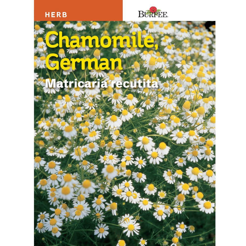 Herb German Chamomile Seed