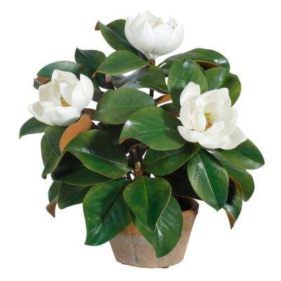 18 in. Potted Garden Magnolia