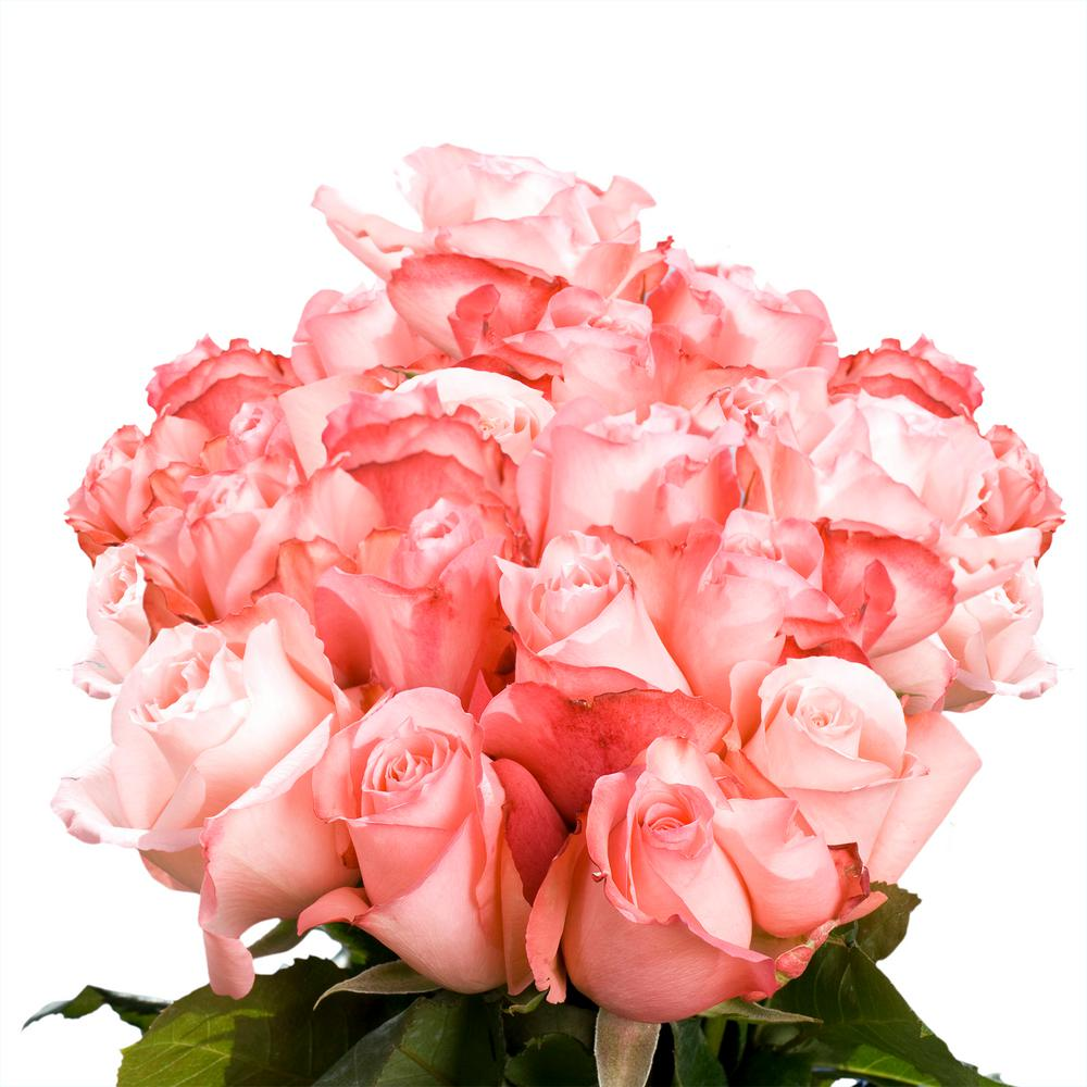Globalrose Fresh Light Pink Color Roses (100 Stems)-livia-100-roses ...