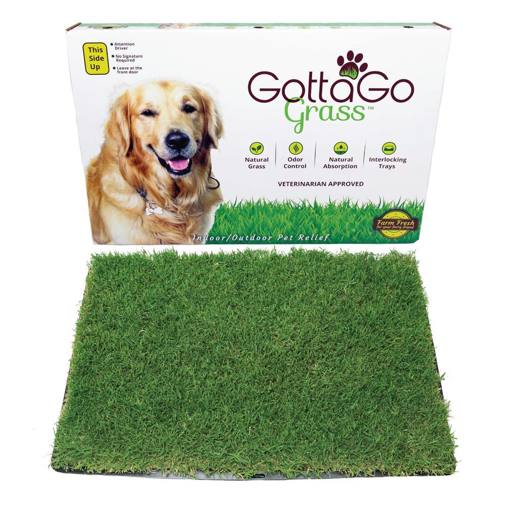 Gotta Go Grass with Tray 2pk