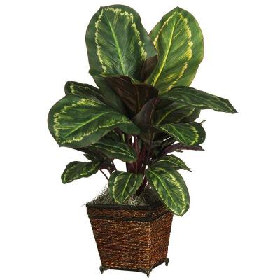 26 in. Maranta Silk Plant with Wicker Basket