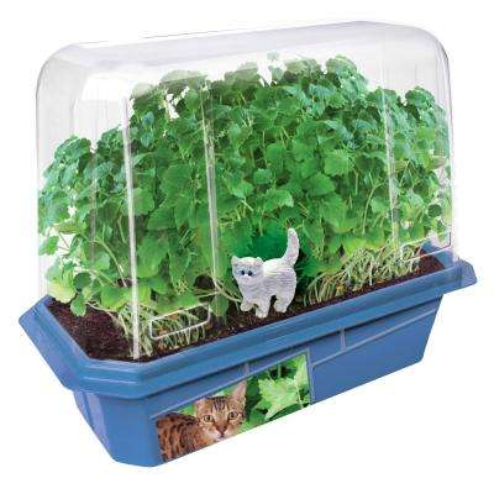Miniature World Clear Plastic Crazy Cat Plant Indoor Garden Terrarium Indoor Garden Seed Starter Kit