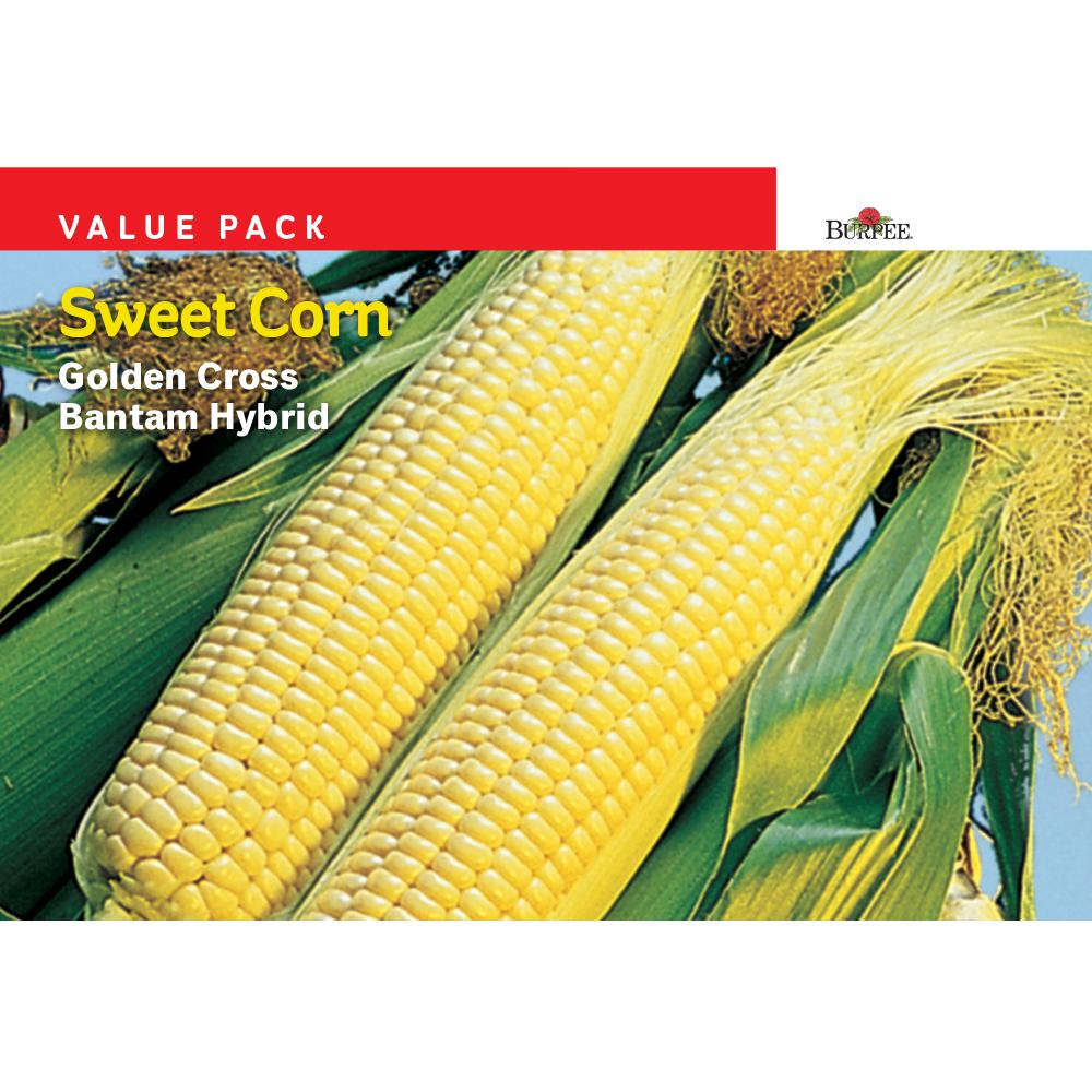 Corn Yellow Golden Bantam Hybrid VP Seed