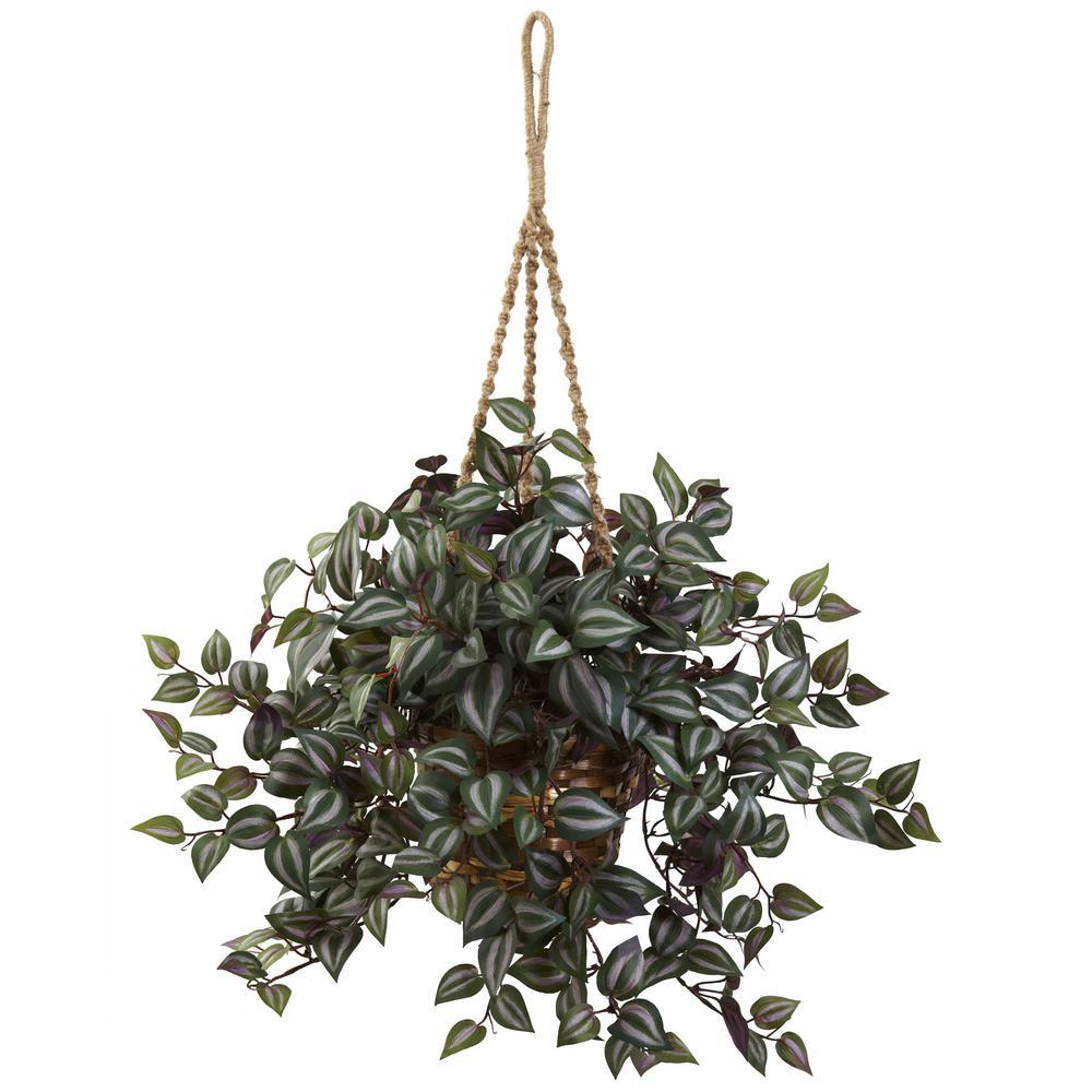 27 in. Wandering Jew Hanging Basket