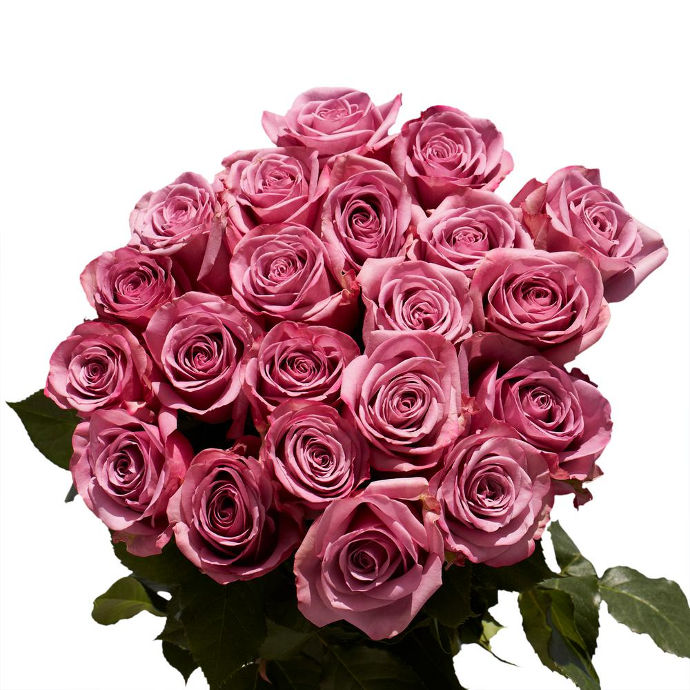 Globalrose Fresh Lavender Color Roses (100 Stems)-cool-water-medium ...