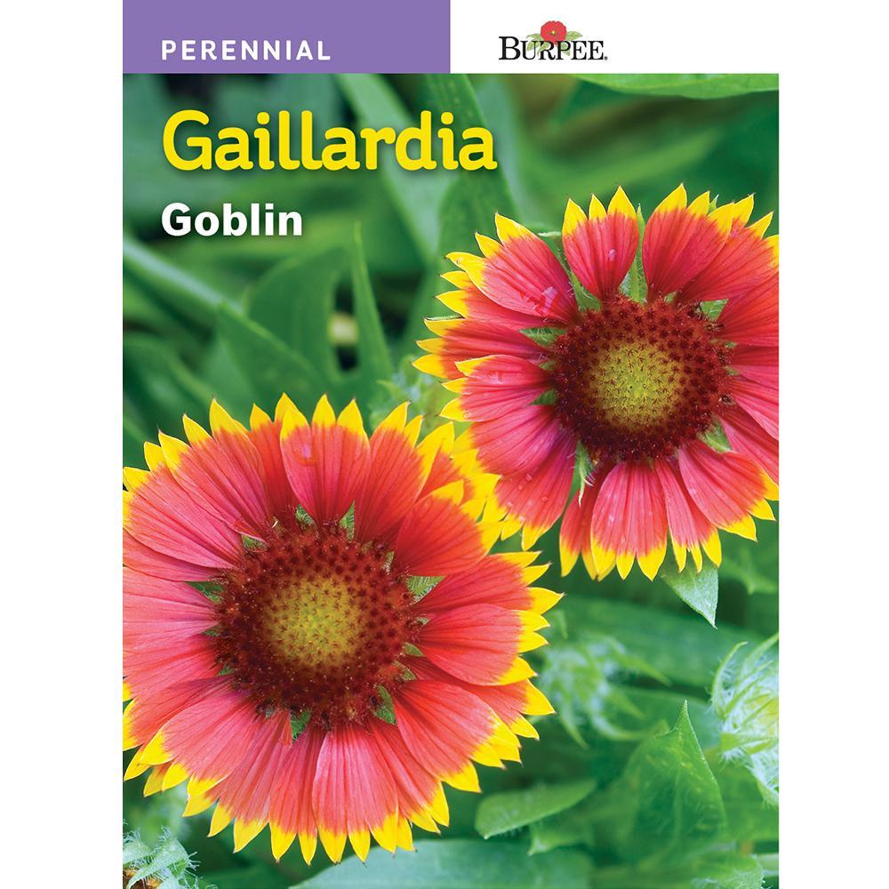 Burpee Gaillardia Goblin Seed 30943 The Home Depot