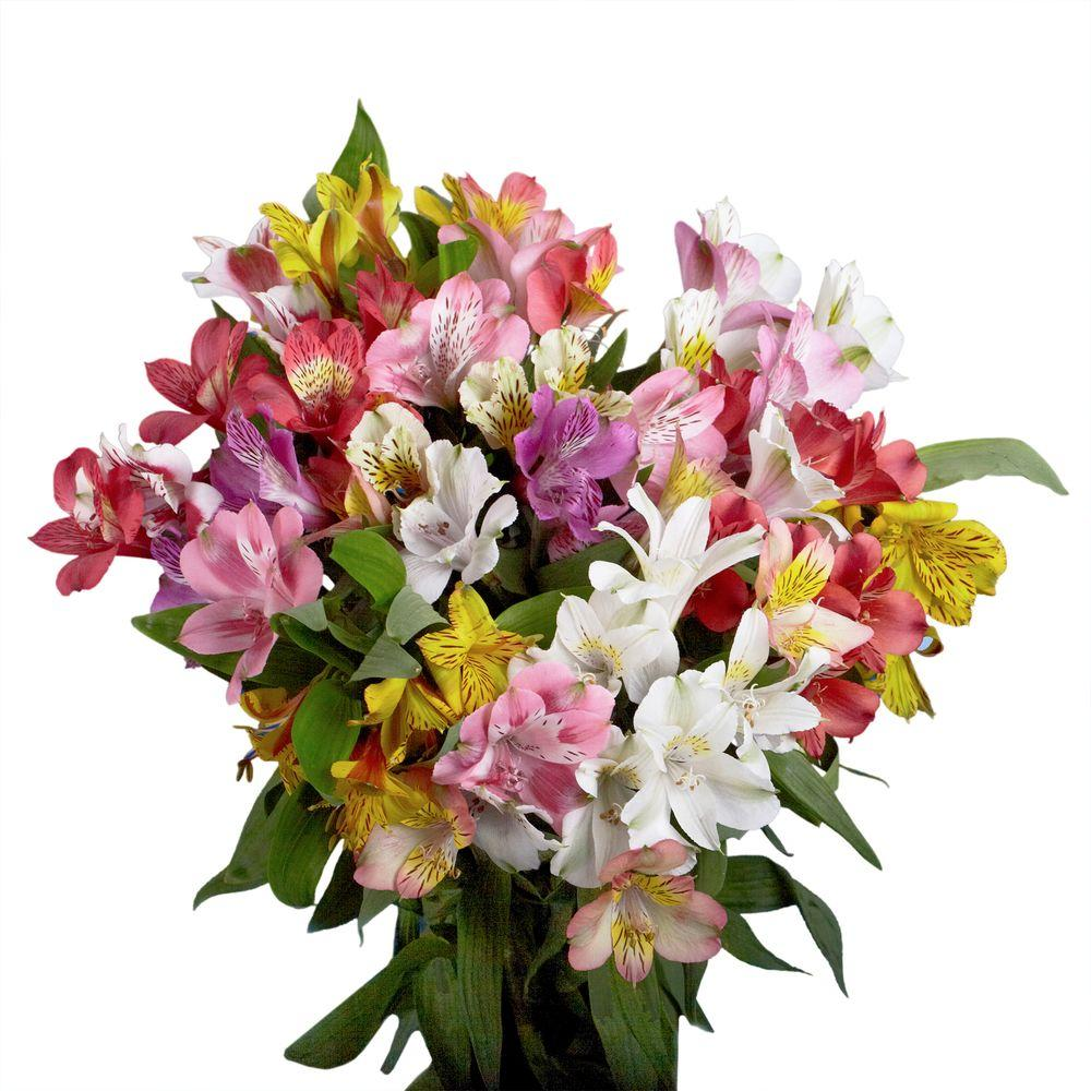 Globalrose Fresh Alstroemeria Flowers (100 Stems - 400 Blooms)