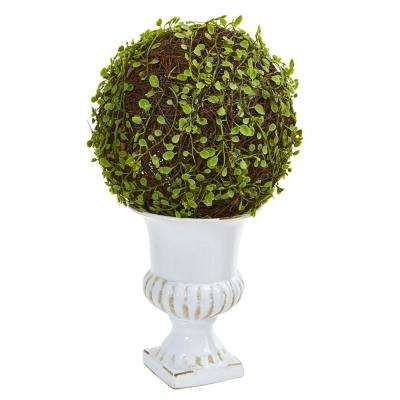 18 in. High Indoor Mohlenbechia Ball Topiary in White Urn