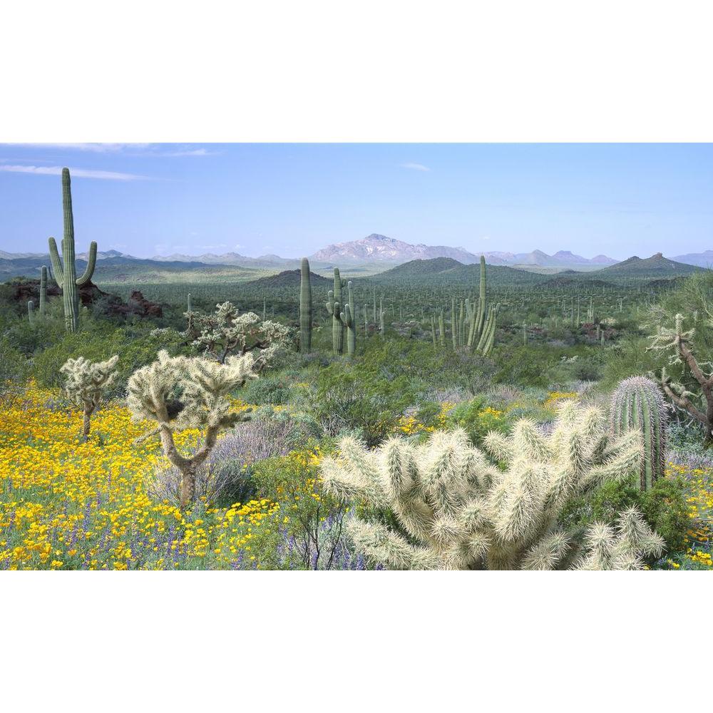100 in. x 60 in. Window Well Scene - Desert