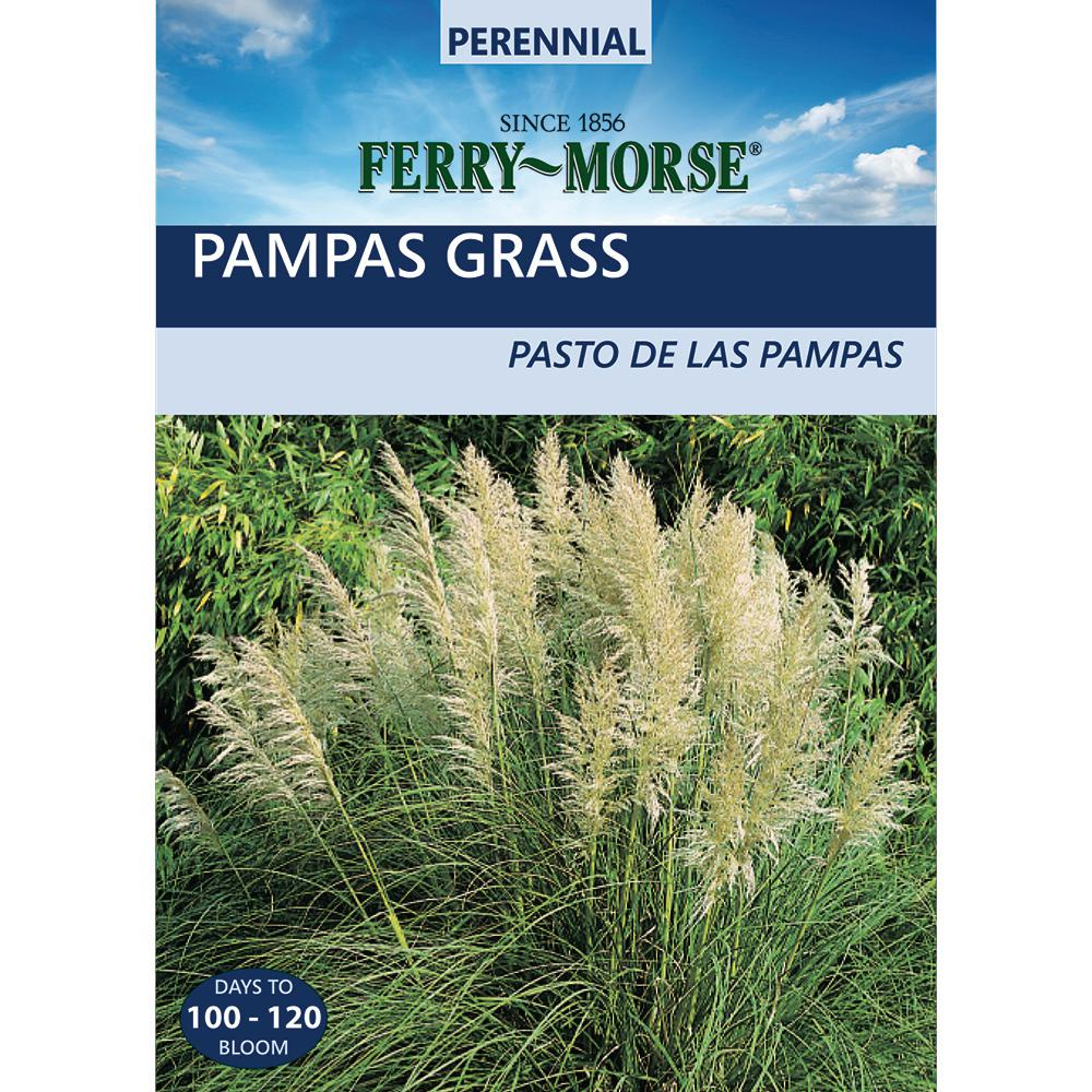 Ferry morse ornamental grass pampas plume seed 2057 the home depot ferry morse ornamental grass pampas plume seed workwithnaturefo