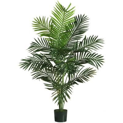 5 ft. Paradise Palm Silk Tree
