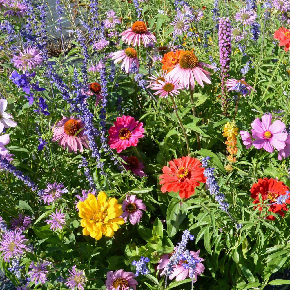 Bumblebee Buffet Flowering Seed Mixture (300-Seed Packet)
