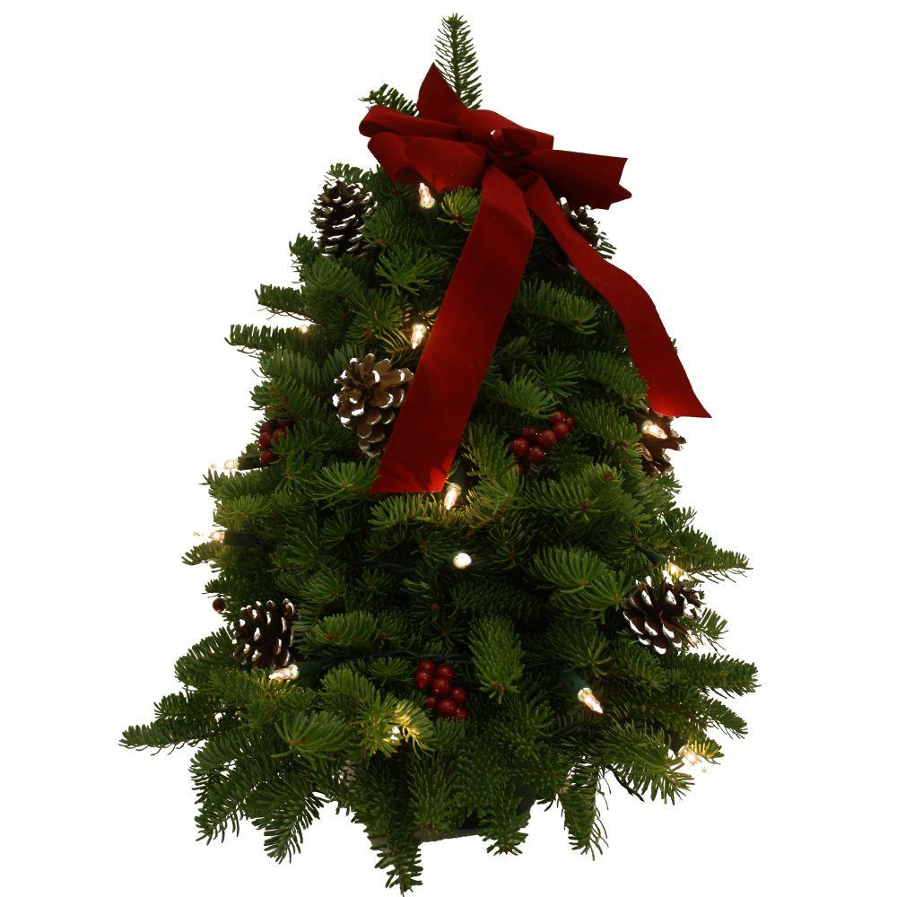 Worcester Wreath 18 in. Balsam Fir Classic Fresh Cut Fresh Pre-Lit Tabletop Tree Arrangement : Multiple Ship Weeks Available
