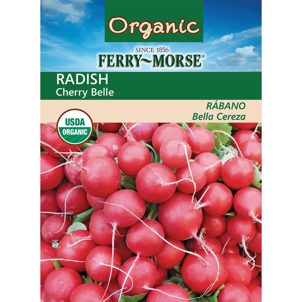 Radish Cherry Belle Organic Seed