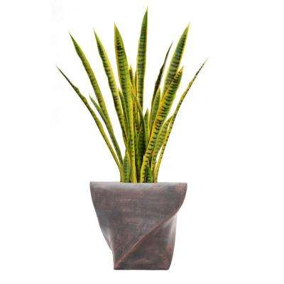 45 in. Tall Snake Plant in Planter