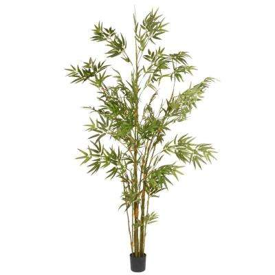 5.8 ft. Japanese Potted Bamboo Tree