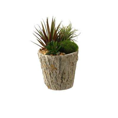 Indoor Easter Grass and Succulents in Weathered Oak Look Cement Planter