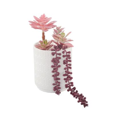 12 in. Pink Succulents in 5 in. Greco Ceramic Pot