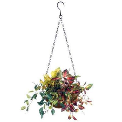 9 in. Assorted Greens Hanging Basket