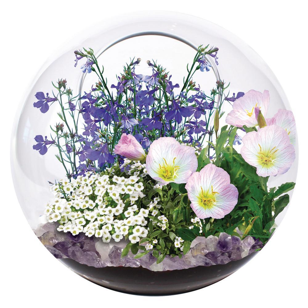 Classic Glass Clear Glass Mini Fairy Triad Indoor Garden Terrarium Indoor Garden Seed Starter Kit