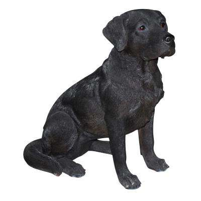 Large Black Labrador