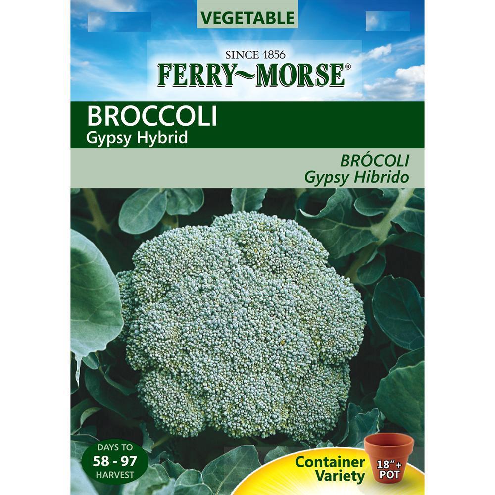 Broccoli Gypsy Hybrid Seed