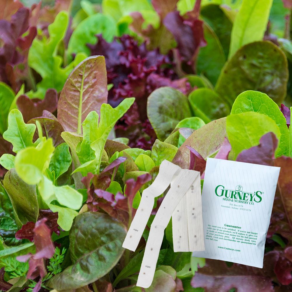 Lettuce Gurney's Premium Blend (15 ft. Seed Tape)