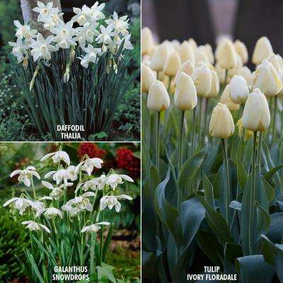 Spring Assorted Mix White Flower Bulbs Garden Plants