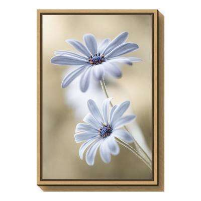 """Cape daisies"" by Mandy Disher Framed Canvas Wall Art"